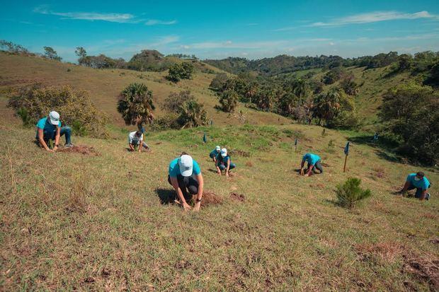 Para el Popular, las jornadas de reforestación son un puntal en su estrategia para compensar su huella ambiental.