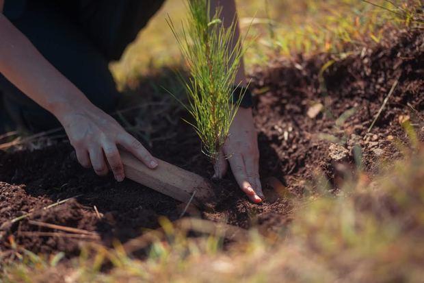 Las reforestaciones se realizaron en terrenos del Plan Sierram, en Santiago, y en las provincias Monseñor Nouel, Monte Plata, Santo Domingo, Peravia y San Juan.