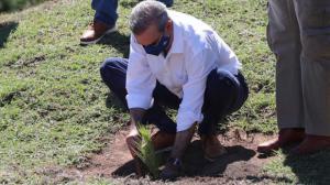 Presidente Luis Abinader y AmbienteRD unen esfuerzos para aumentar cobertura boscosa del país