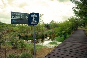 """Al visitar el """"Sendero del mangle"""", ubicado al este del botánico, los transeúntes pueden apreciar la belleza y relevancia de los mangles."""