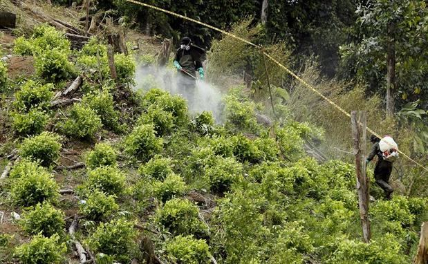 Académicos piden a Biden abandonar el respaldo a la fumigación aérea en Colombia