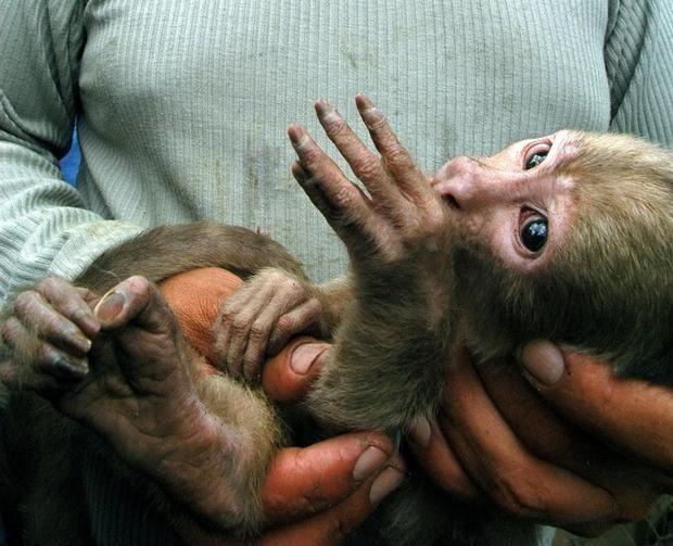 Ecuador es uno de los países más megadiversos del mundo y afronta una dura batalla contra el tráfico y apropiación ilegal de animales.