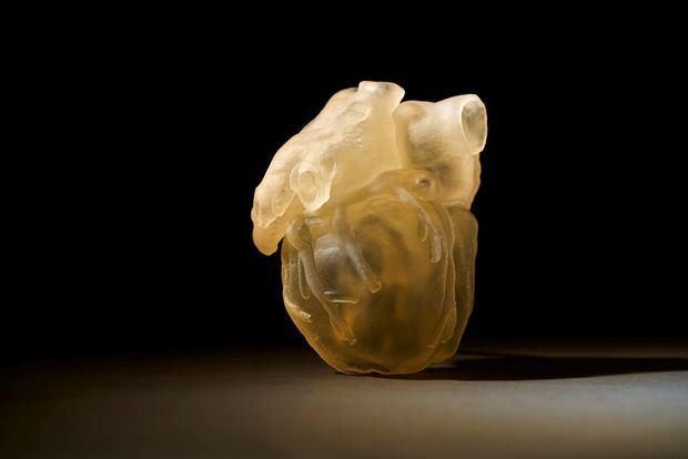 Fotografía cedida este lunes por la empresa Stratasys, muestra un prototipo de corazón elaborado en 3D. La empresa Stratasys diseñó un nuevo modelo de impresora que reproduce en tres dimensiones partes del cuerpo humano como tejidos para mejorar las operaciones quirúrgicas, informó la compañía en un comunicado.