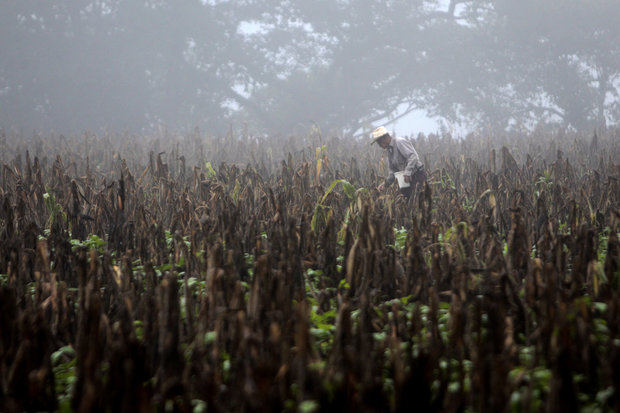 FAO: El cambio climático lastra la lucha contra la pobreza rural en Centroamérica