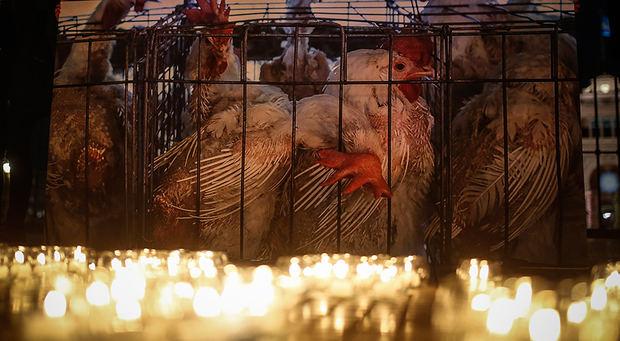 China levanta un veto de 5 años a importación de productos avícolas de EEUU