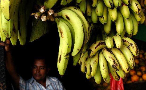 La estrategia contra peligroso hongo del banano debe ser integral y regional