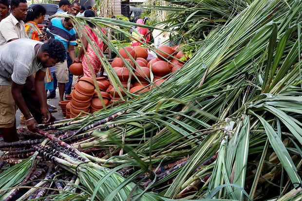 La exportación de azúcar y sus derivados cayó 10 % en República Dominicana en un año