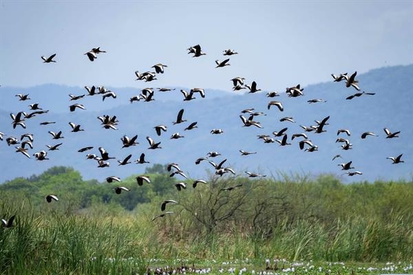 El Parlamento Europeo pide una ley de biodiversidad con normas obligatorias