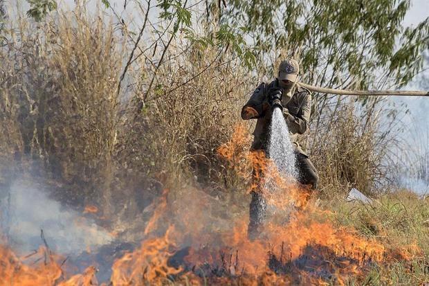 'La deforestación es la causa principal de las pérdidas de carbono en los bosques tropicales, pero no opera sola', indicó el estudio encabezado por Celso H.L. Silva, del Laboratorio de Ecosistemas Tropicales y Ciencias Ambientales en Sao Jose Dos Campos, Brasil.