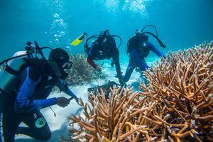 Protecto restauración de corales FGPC.