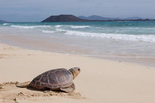 Ecuador busca preservar la anidación de tortugas marinas