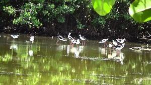 Aves Humedales Nigua.