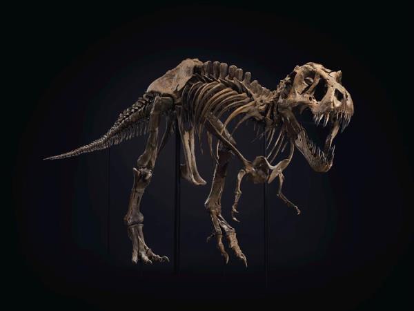 El T. Rex Stan arrasa en Nueva York y se subasta por 32 millones de dólares