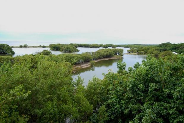 """Ministerio de Medio Ambiente celebra actividades por el """"Día Mundial de los Humedales"""""""