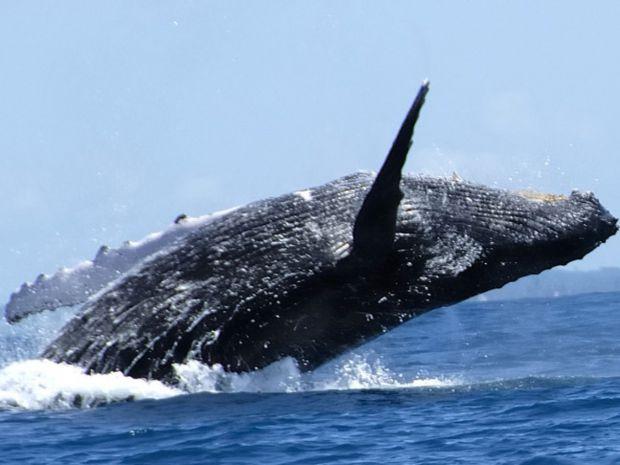 Una hermosa excursión : Ver a las ballenas en Samaná