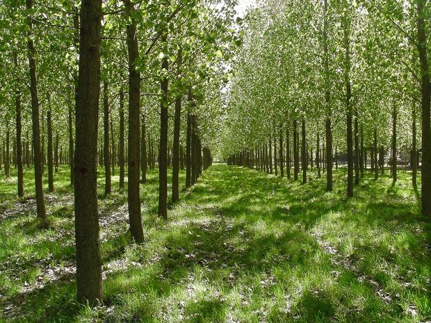 Respaldan compromiso del gobierno electo para desarrollar de manera sostenible el sector forestal