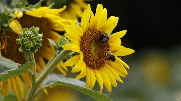 Estudio advierte que en cien años se acabarán los insectos