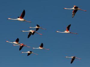 República Dominicanaes un buen destino para las aves migratorias.