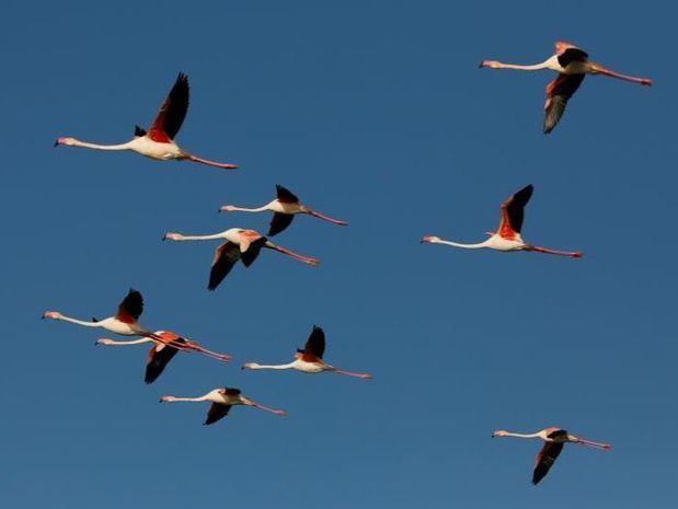 República Dominicana, un buen destino para las aves migratorias