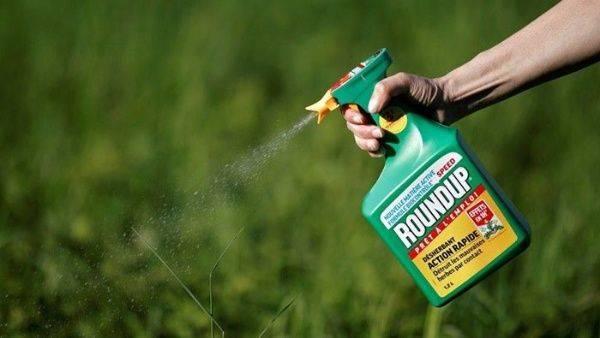 Bayer deberá pagar $ 80 millones en juicio por uso de herbicida