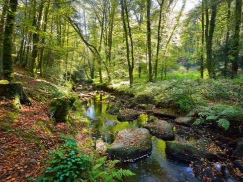 Restaurar los bosques tropicales es fundamental para la salud del planeta.