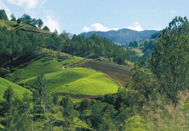 Ministerio de Medio Ambiente destaca la importancia de preservar los bosques