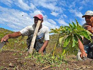 Trabajadores del campo dominicano.