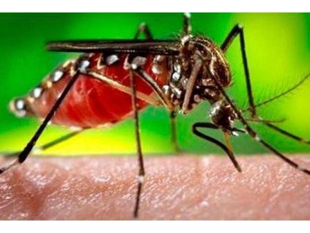 Se han registrado 50 muertes por dengue hasta 8 de diciembre en el país