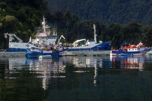 Catástrofe ambiental en Chile por muerte de casi 5.600 toneladas de salmones