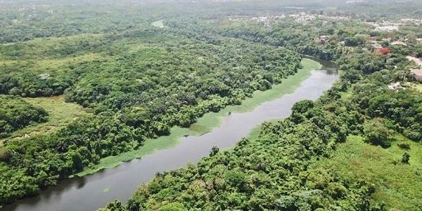 Realizan estudio de diversidad de especies leñosas en área río Isabela