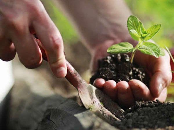La actual crisis sanitaria puede minimizar las exigencias medioambientales