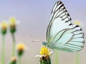 Asamblea de ONU Medio Ambiente se centrará en soluciones basadas en la naturaleza.