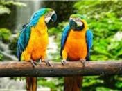 Celebran primer congreso sobre fotografía de conservación