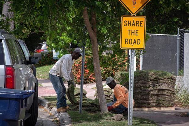 Unos obreros trabajan cambiando palmeras por árboles el 3 de marzo de 2021, en una carretera de Miami Beach, Florida, EE.UU.