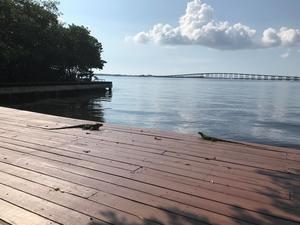 Un par de iguanas fue captado este miércoles al tomar el sol en un muelle a orillas de la bahía Vizcaína, en el barrio de Brickell, en Miami, Florida, EE.UU.