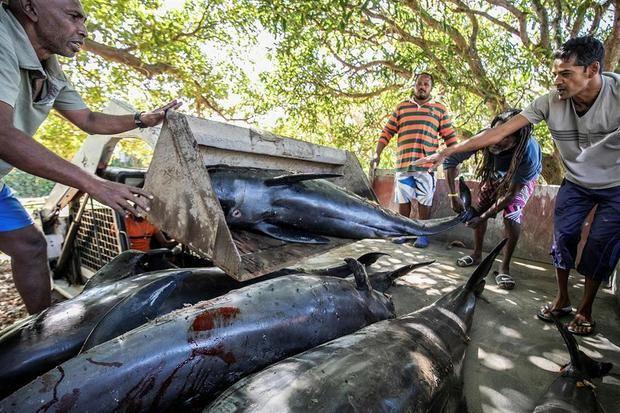 Manifestaciones en Mauricio tras el desastre ecológico y la muerte de 39 delfines.