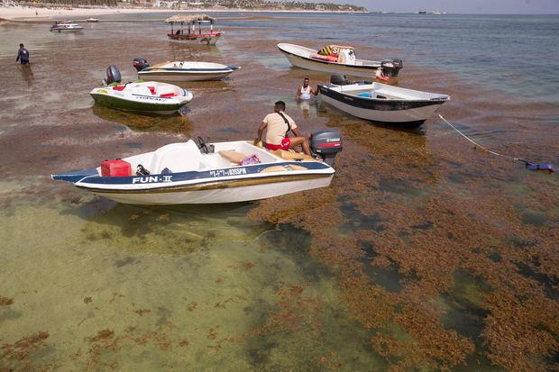 Fotografía de una playa cubierta de sargazo, el 1 de septiembre de 2021, en Punta Cana, República Dominicana.