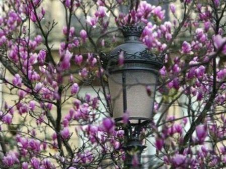 La primavera comienza hoy 20 de marzo