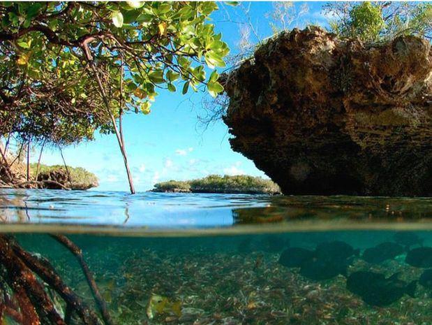 Algas, pastos marinos, ciénagas y manglares: otra barrera contra el cambio climático en peligro