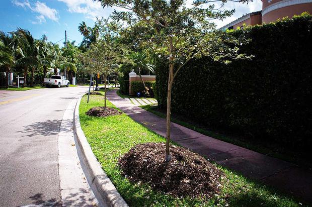 Vista general de una calle con nuevos árboles plantados el 3 de marzo de 2021, en Miami Beach, Florida, EE.UU.