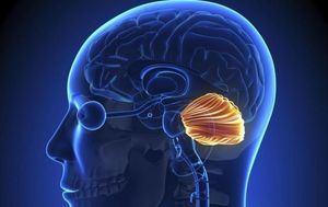 Investigación sobre el cerebro.