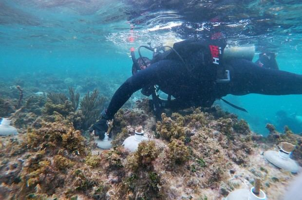 Fotografía sin fecha especifica de toma, cortesía de Organizacion Oceanus, que muestra a un expertos mientras examina un arrecife, en la costas de Punta Nizuc, en el balneario de Cancún en Quintana Roo, México.