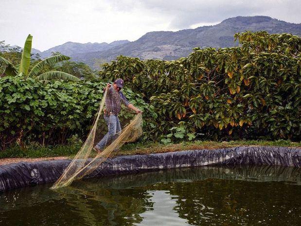 Una piscifactoría para la cría de tilapia de forma sostenible en Guatemala.