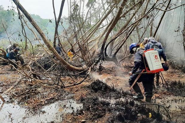 Fotografía cedida hoy por la Unidad de Parques Nacionales Naturales de Colombia que muestra bomberos que combaten el incendio forestal del Parque Isla Salamanca, en Sitionuevo, Colombia.