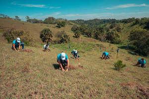 El Popular junto a sus aliados han sembrado este año 153,000 árboles en varias provincias del país.