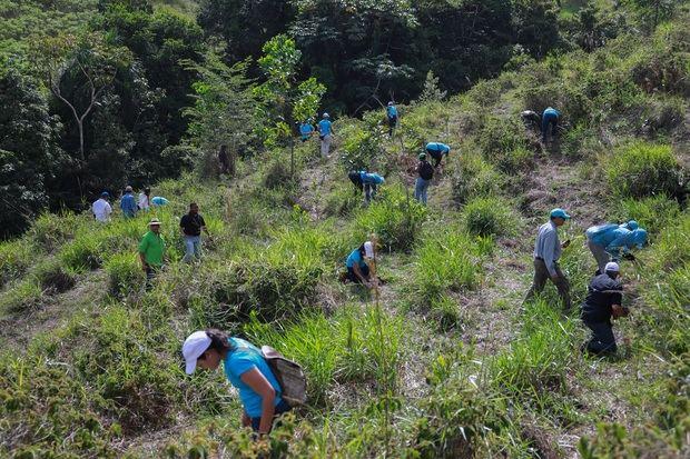 Los empleados del Grupo Popular sembraron más de 52,000 árboles.