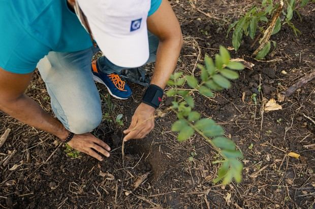 Popular realiza jornada de reforestación en San Francisco de Jacagua