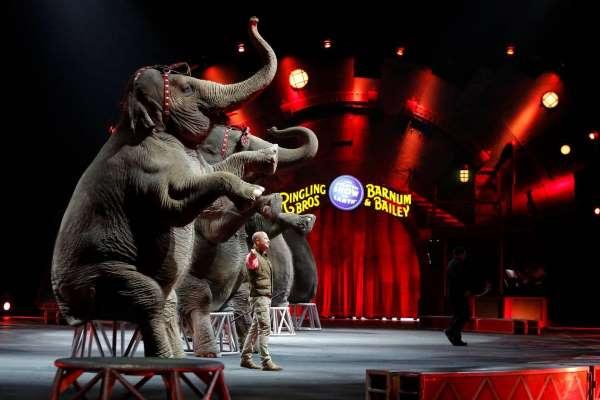 Francia prohibirá animales salvajes en circos y cría del visón para peletería