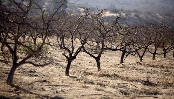 El cambio climático podría causar un efecto dominó en la extinción global