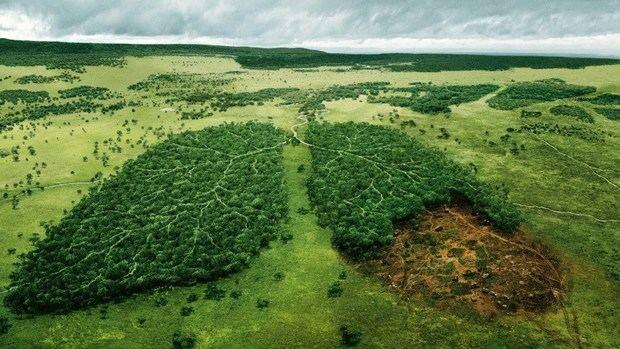 Foro internacional pide más responsabilidad empresarial contra deforestación